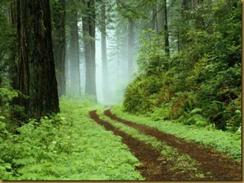 Una ruta del bosque en el parque regional de Redwoods, California.