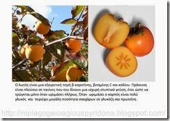 τα φρούτα του φθινοπώρου (5)
