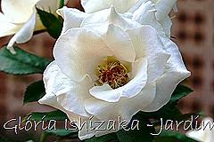 20   - Glória Ishizaka - Rosas do Jardim Botânico Nagai - Osaka