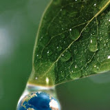 16 Oct 2001 --- World in a Dewdrop --- Image by © Firefly Productions/CORBIS