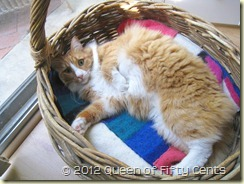 Noll in a basket