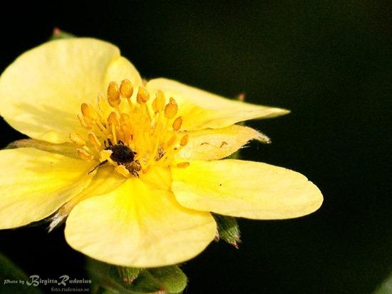 blom_20111014_tok1a