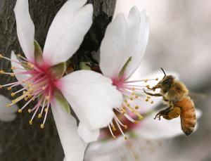 Neonicotinoids may affect bees' ability to navigate. Photo: John Walker / Corbis