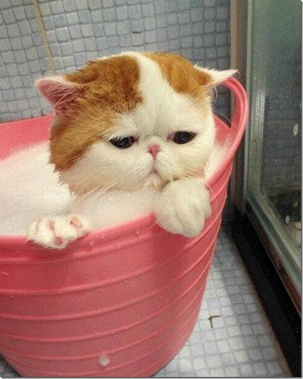 gato tomando banho (6)