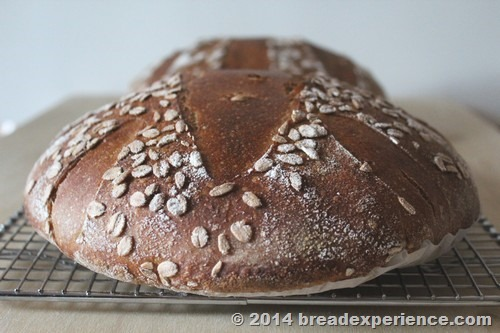 Ancient Grain Tartine