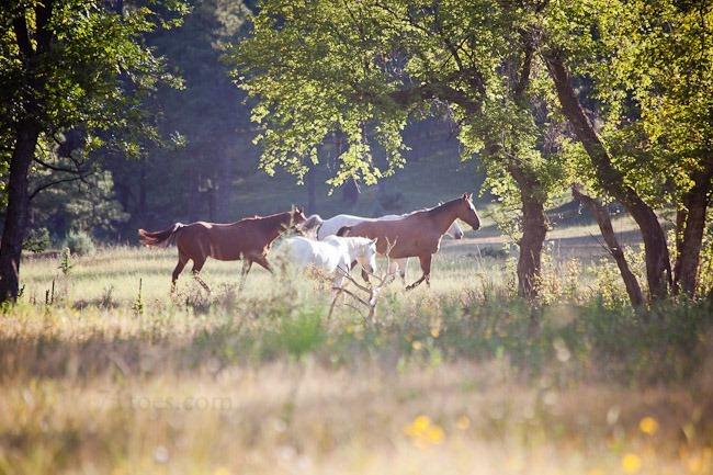 2012-09-21 Barney ranch 60594