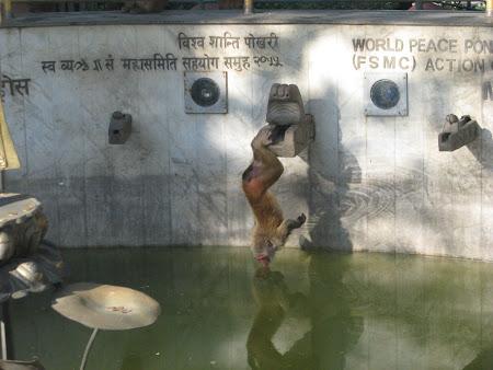 Maimuta yogina