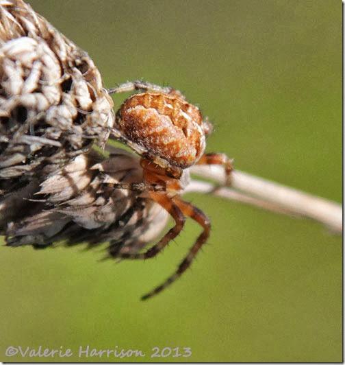 21-spider