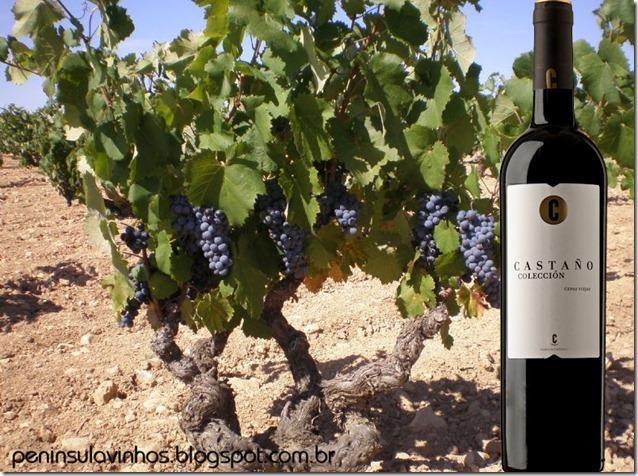 castano-collecion-yecla-peninsula-vinhos