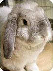 Peter Lop/Holland Mix Loves to be pet and eat his greens! Dedham, MA (See end of blog for a link to my info.)