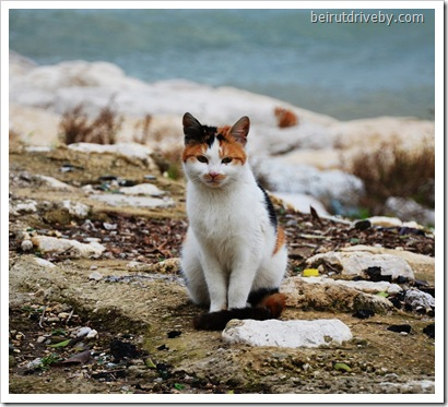 pretty kitty (30)