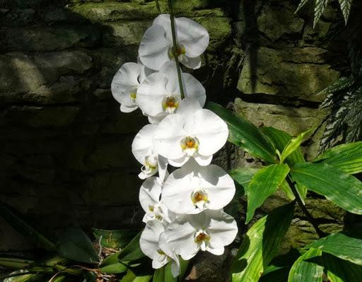 Opreyland Flower3