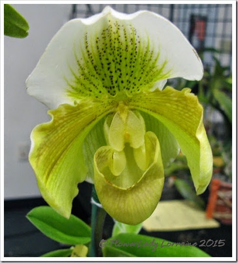 02-08-orchids12