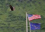 American Eagle by Bayside RV