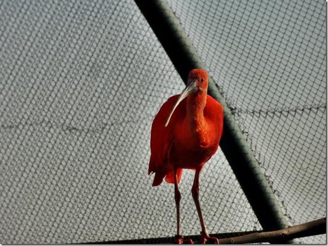 Santiago_Zoo_DSC03788