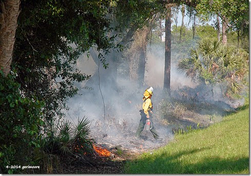 Myakka River SP fire 008