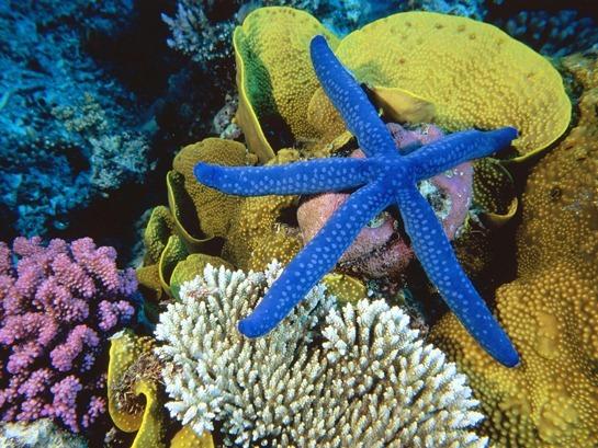 Great-Barrier-Reef-australia-wallpaper