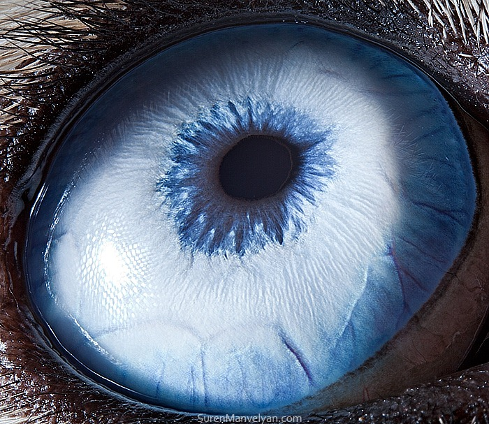 animal-eyes-11