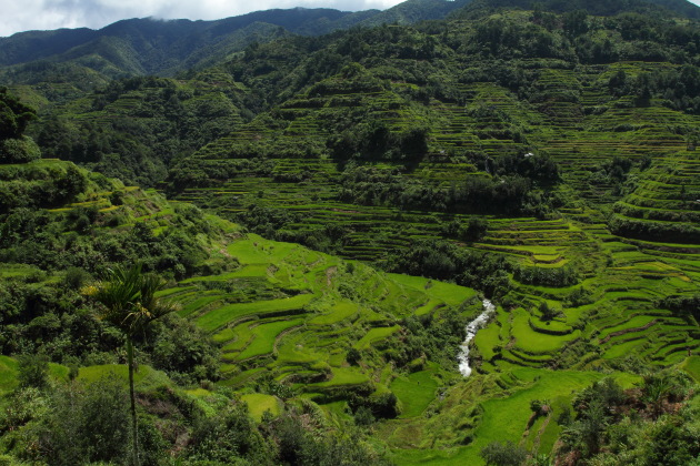 Rice Terraces from Banaue View Point