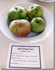 fair Pewaukee apple