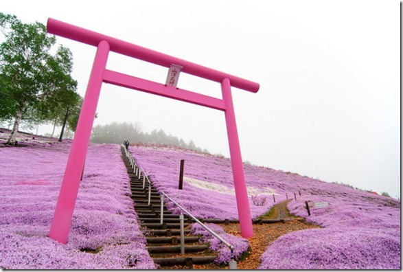 pink-park-japan-11