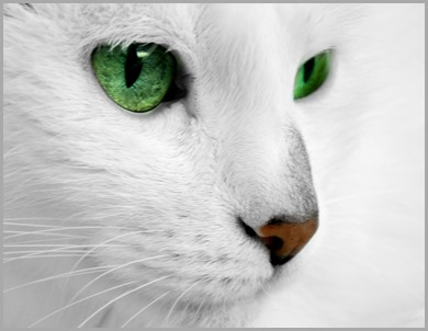white_cat_with_green_eyes_by_reconreno-d5kkolm