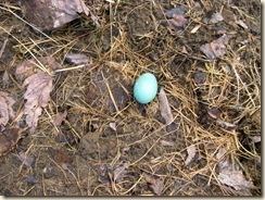 Robin egg blue