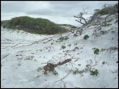 Dune hike & rain paddle 024