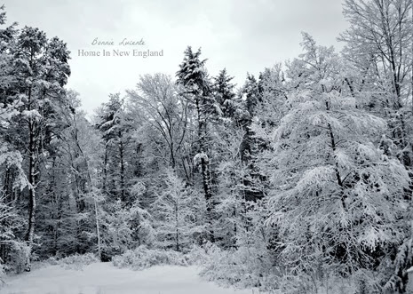 snowy woods1