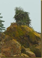 untitled Osprey Nest_ROT6532 September 24, 2011 NIKON D3S