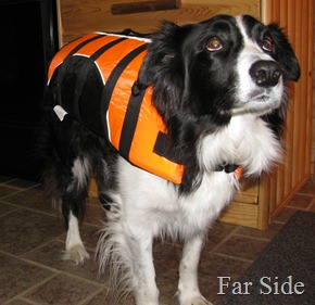 Chance in his life jacket