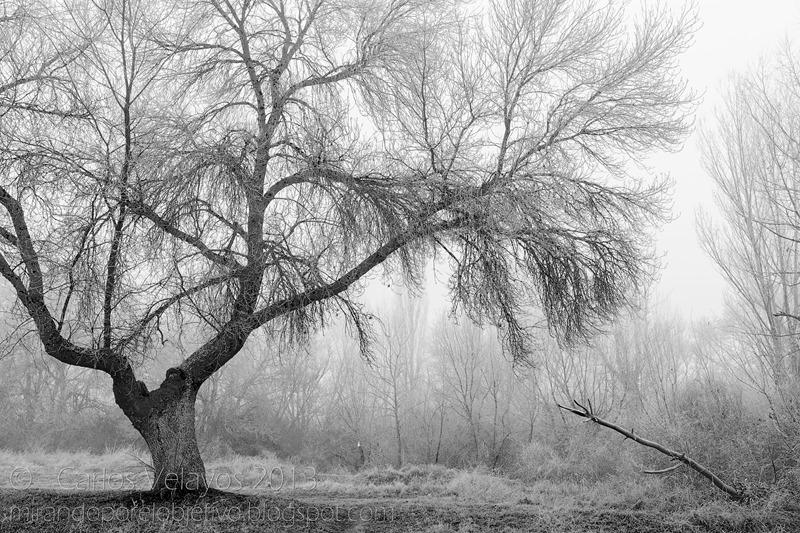 Niebla y Escarcha -2-