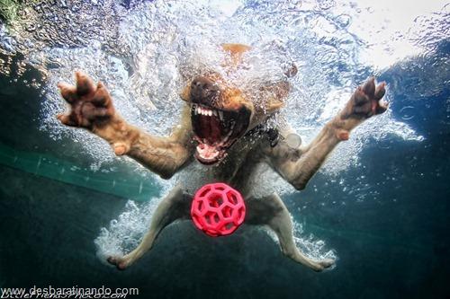 caes subaquaticos desbaratinando  (2)
