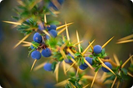 calafate flora patagonia