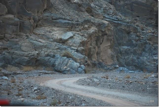 11-08-13 A DV 4x4 Titus Canyon Road (458)