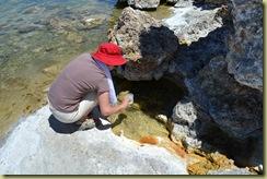 Shrimp Catching