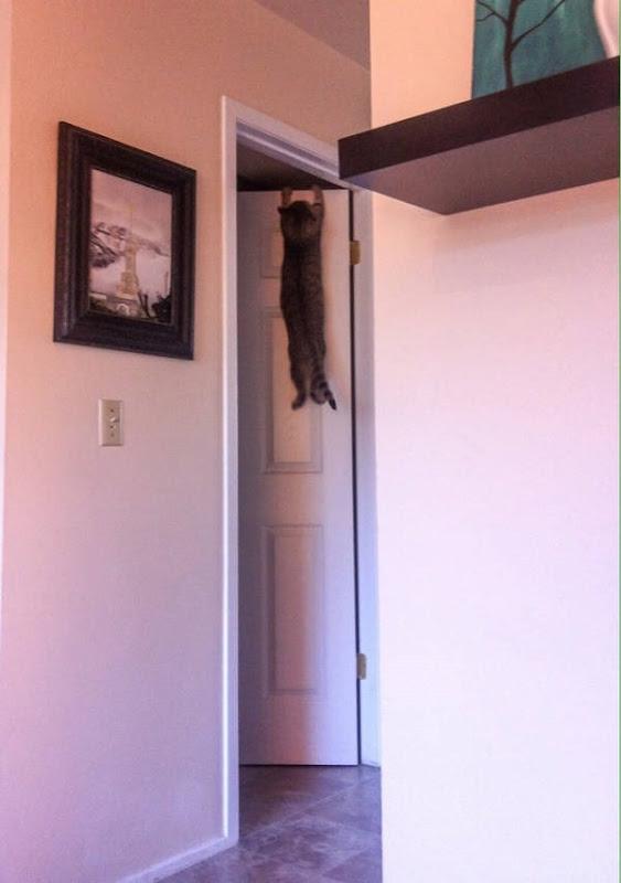 Os gatos não são muito bons em esconde-esconde 28