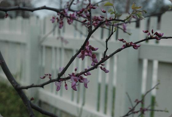 garden 028