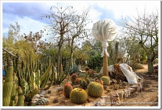 141231_Tucson_Bachs_0050