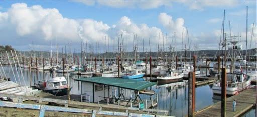 FishingFleet_SeaLions_Tourists-1-2014-04-28-21-33.jpg
