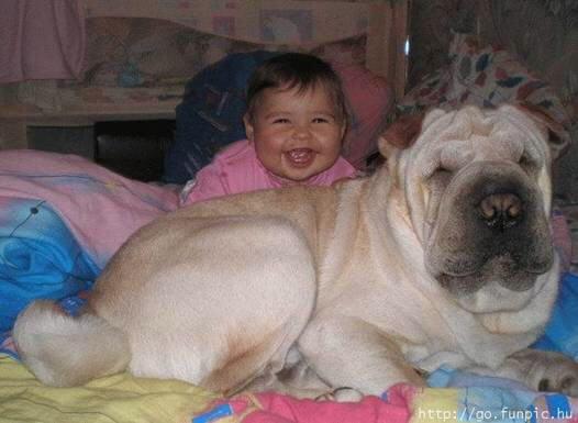Baby sitter Pet