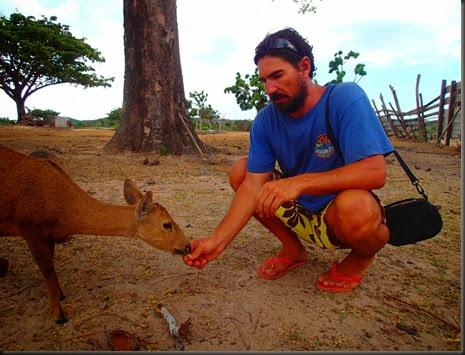 Calauit Safari park deer