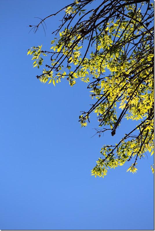 treesky