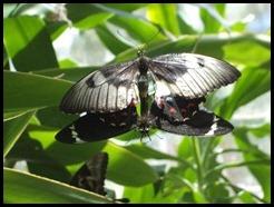 Australia, Kuranda Butterfly Park (8)