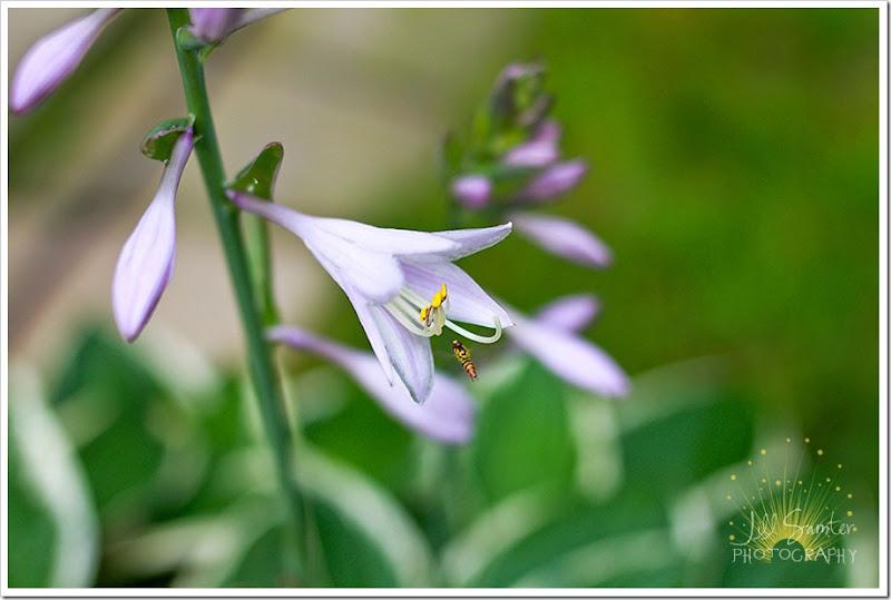 flowers-6012