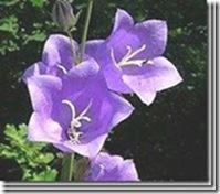 clip_image01952