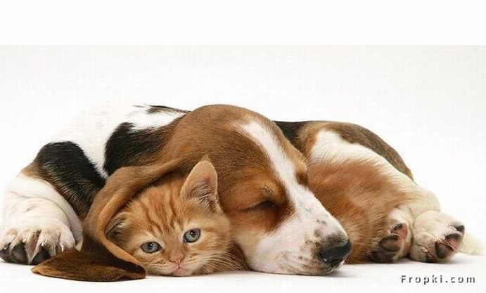 Unusual Friendships: Friendship is one mind in two bodies by Mencius