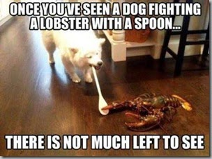 dog wooden spoon lobster