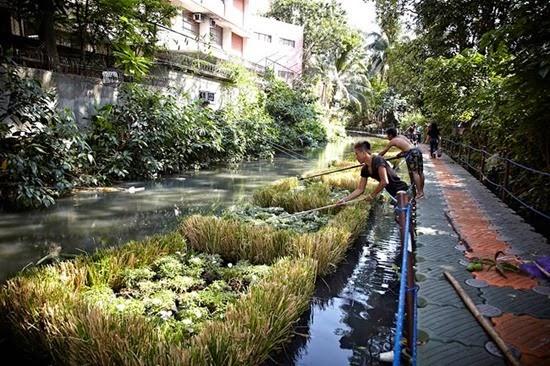 Plantas Rio Pasig 04