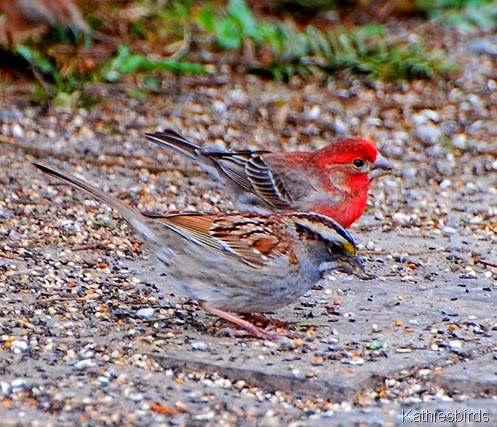 11. sparrow and finch-kab
